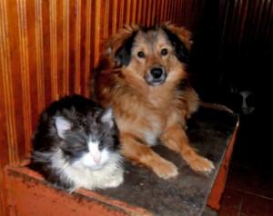 Rechts: Ich hatte einen Autounfall und meine Retterin Dr. Ludmilla hat mich mitgenommen und gesund gepflegt. Ich bin ein Rüde, 4 Jahre. Auch hätte ich gerne einen Namen. Links: Ich wurde von Hunden übelst zugerichtet. Natürlich war Ludmilla meine Retterin. Danke Ludmilla. Wie wär's mit einer Patin?